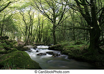 Golitha Falls at Dobwalls, river running through a wooded...