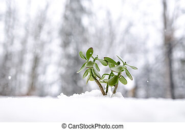 New green plant growing out of snow with snowflakes falling...