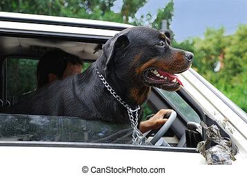 見る, 自動車, 窓, によって, 犬
