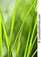 Green grass background - Natural background of green grass...