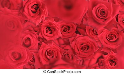 Fallling Roses - Red roses falling into a pile