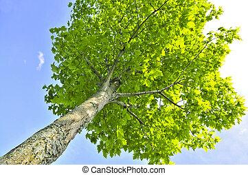 綠色, 樹