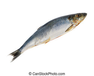 one herring on white background