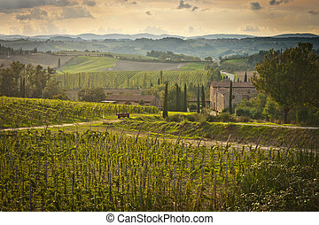 Tuscany landscape with wine yard in foreground.