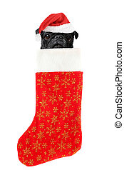 christmas stocking dog - pug with santa claus hat inside...