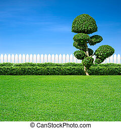white fence and ornamental tree
