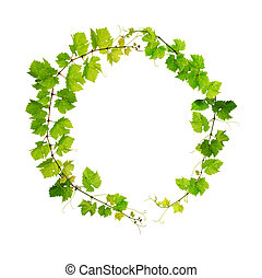 Fresh grapevine circle border - Green grapevine round frame,...