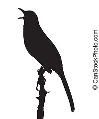 Brown Thrasher - Vector silhouette of Brown Thrasher...