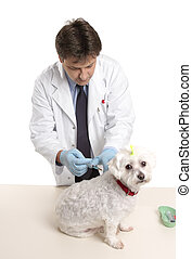 Vet giving dog injectable medication - Veterinarian about to...
