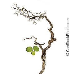 Dry branch with new leaf