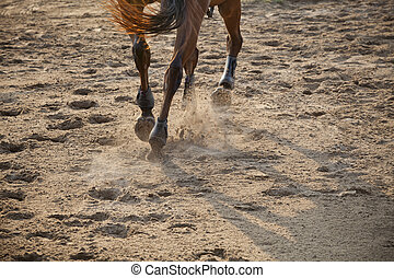 legs of running horse - running horse on sand field