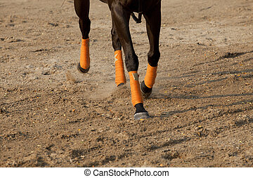 leg of running horse on sand field