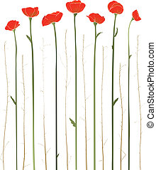 Beautiful Red Poppies Illustration - Vector decorative...
