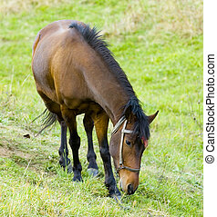 Horse in the field at the Bulgarian countryside