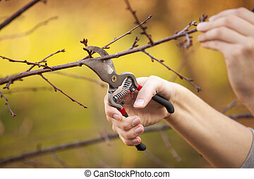 Pruning fruit tree - Cutting Branches at spring - Pruning an...