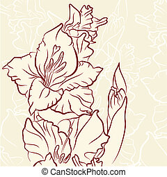 Gladiolus flower - 	Gladiolus flower vector illustration