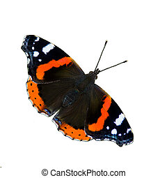 Red Admiral Butterfly (Vanessa Atalanta) isolated - The...