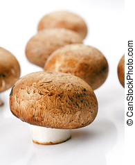 group of champignons isolated on white background
