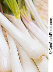 shallot - Cooking ingredient series Shallot. for adv etc. of...