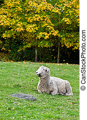 Romney Sheep - portrait of a Romney Sheep
