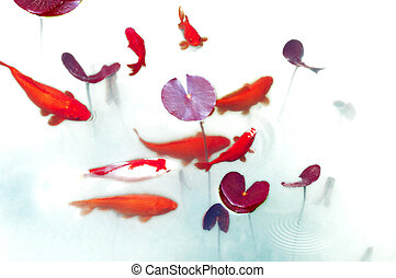 Goldfish in spring pond - Goldfish playing in lotus pond
