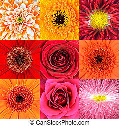 Collection of Nine Red Flower Macros - Collection of Nine...