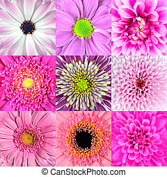 Collection of Nine Pink Flower Macros - Collection of Nine...