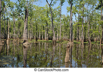 Louisiana Bayou - Louisiana bayou on a sunny spring day