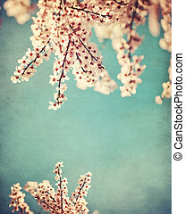 Pink dogwood grunge background - Pink dogwood blooms on...