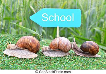 學校, 蝸牛, 三, 方式