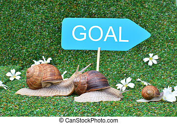 Three snails rushing to the goal