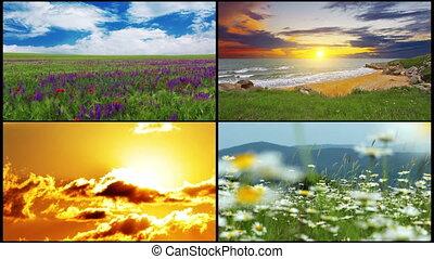 series of summer landscape