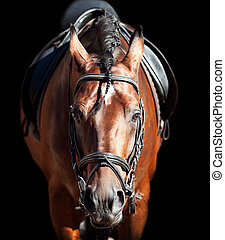 portrait of bay sportive horse - portrait of beautiful...