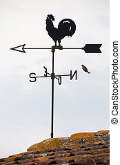 Wind cock weather vane direction with flying bird