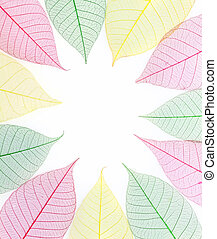 colorful skeleton leaves on white background