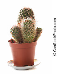 Cactus - Green cactus in brown flowerpot with shadow