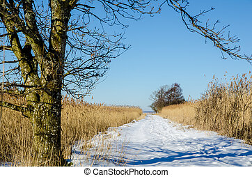 Path through the reeds - A winter landscape with a footpath...