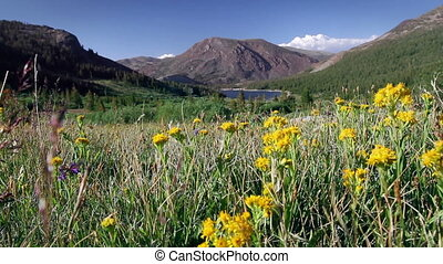 Yosemite National Park 1 - Wide angle of flowers with...