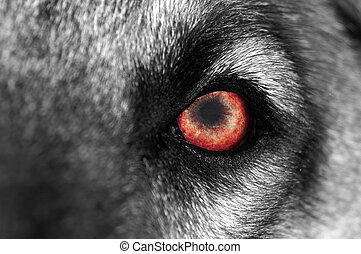 Wolf Eye - Red - A macro shot of a wolf or dog with a red...