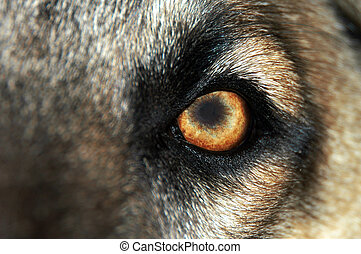 Wolf Eye - Normal - A macro shot of a dogs eye