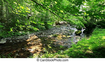 mountain stream in the forest