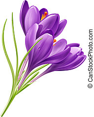 Flowers on a white background - Vector spring flowers...