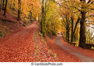 autumn colors  - autumn season, colors and shades of nature