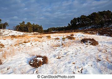 wild winter landscape in Veluwe - sunny wild winter...