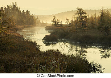 Misty river and pines in early morning light - The Baptism...