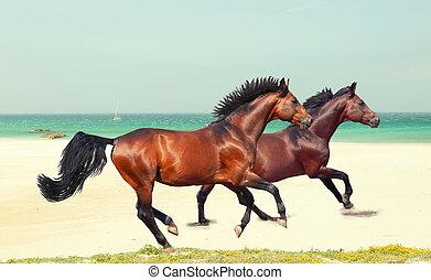 galloping breed horses at sea beach - galloping beautiful...