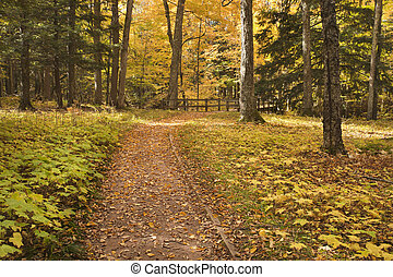 Path in the autumn woods leading to a bridge - A path in the...