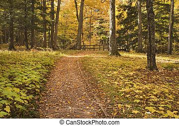 caminho, Outono, madeiras, guiando, ponte