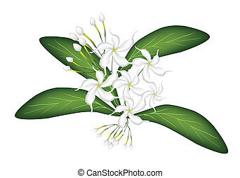 An Illustration of Cape Jasmine on Tree - Beautiful Flower,...