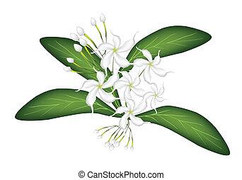 An Illustration of Cape Jasmine on Tree - Beautiful Flower,...